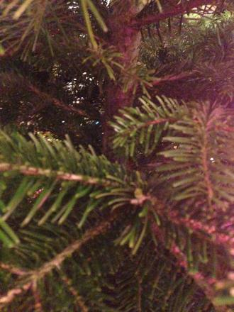 The hospice will be collecting Christmas trees next weekend