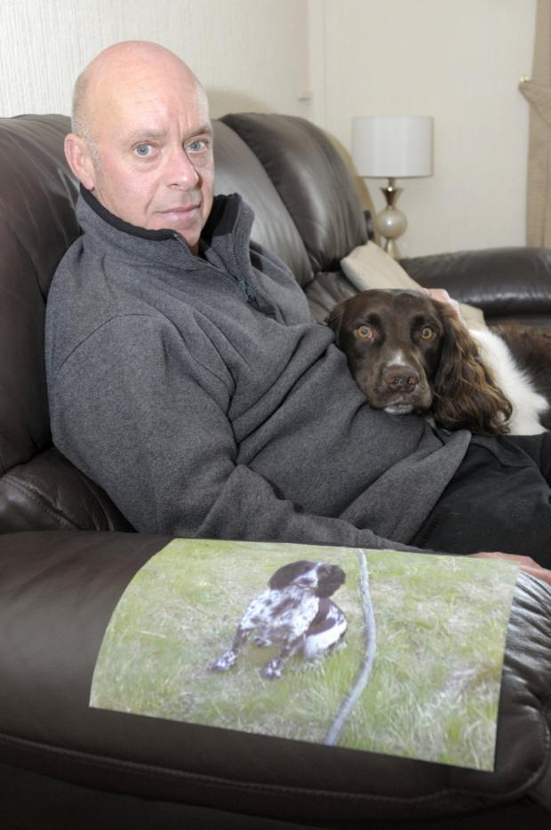 Leigh Journal: Spaniel Taffy has not shown any symptoms of the disease but owner Gary Hallows says his other dog Sally is in quarantine after falling ill