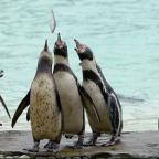 Leigh Journal: A story about a penguin has won a literary prize