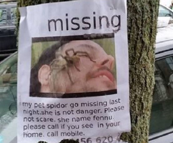 One of the missing spider posters seen in Penge (Photo credit: Ashley Beck)