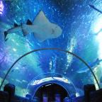 Leigh Journal: Walk through the underwater tunnel at Sea Life
