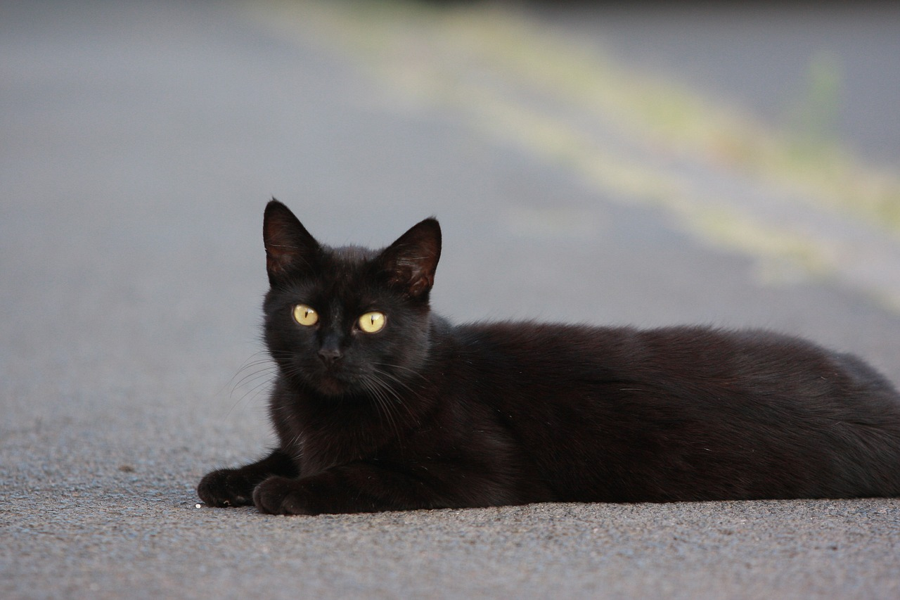 Drivers who hit a cat MUST report it to police under new law proposed